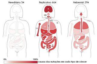 Porcentagem da influência dos fatores hereditários, replicativos e ambientais nas mutações que causam os diversos tipos de tumores no corpo feminino. A média para todos os cânceres é apontada acima das figuras. A intensidade do vermelho em cada tecido representa a influência desse fator para aquele câncer.