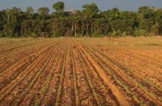 Micro-organismos de solo: na floresta amazônica, a diversidade é menor!