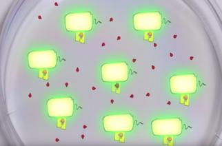 Bactérias contam em quantas estão antes de atacarem