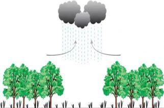 Desmatamento muda sistema das chuvas em Rondônia