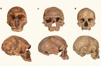Descoberta no Marrocos liga fóssil de 350 mil anos a nós