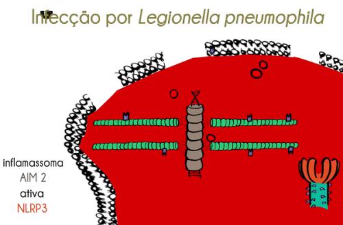 Corpo combate pneumonia com inflamassomas. Já ouviu falar?