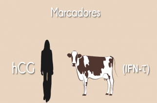 Genética é aliada para melhorar reprodução bovina