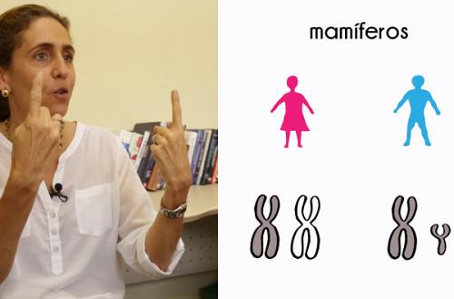 Em mulheres, cromossomo X desliga antes do que se pensava