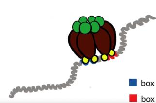 Molécula explica transição da forma da Pseudomonas aeruginosa