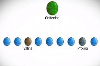 """Ocitocina mutada faz macaco ser """"pai"""""""