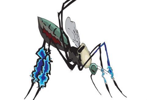 sabethes - mosquito transmissor do vírus da febre amarela. Ilustração: Daniel Hebling
