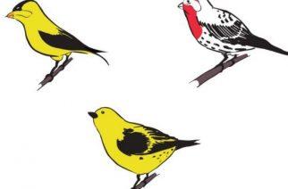 De onde vem a cor dos passarinhos?